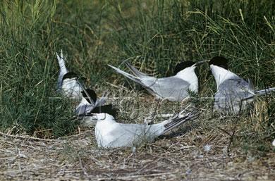 Черноморский биосферный заповедник Птицы